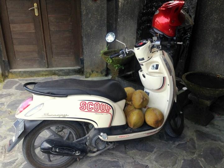 Кокосы и мопед Honda Scoopy
