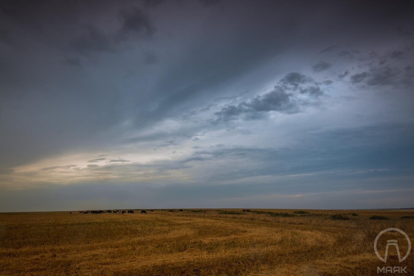 Дождливый Куяльник (10)