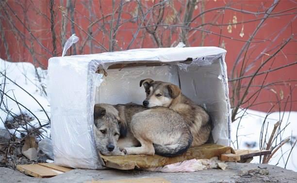 бездомные животные