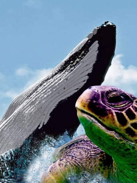 tours tortugas marinas y avisamiento de ballenas