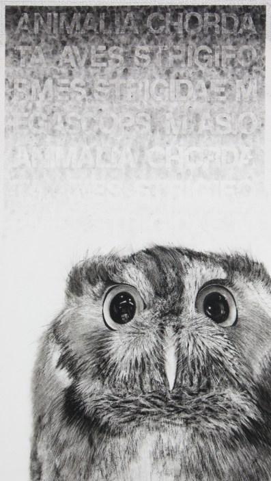Karen Bondarchuk, My Name is Hubert and I am not an Owl