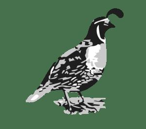 cropped-quail