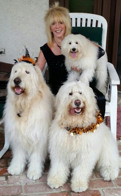 My beautiful therapy dogs
