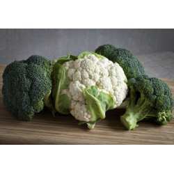 Marvellous Cauliflower How To Get When To Harvest Broccoli Uk When To Harvest Broccolini Broccoli Broccoli