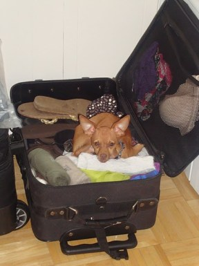 Jacob all packed and ready to go!