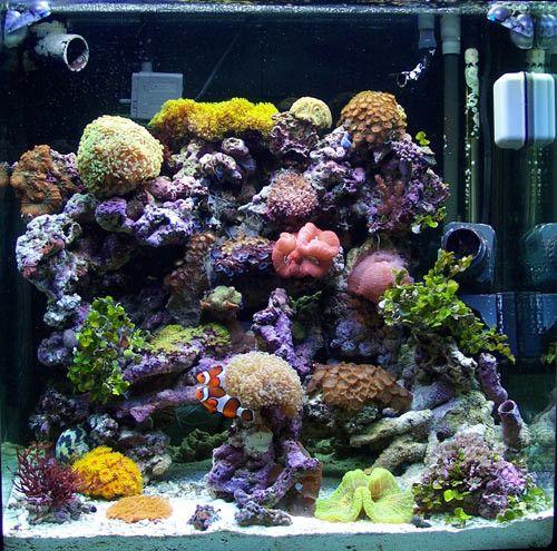 salt water fish tank   Salt water fish   Pinterest