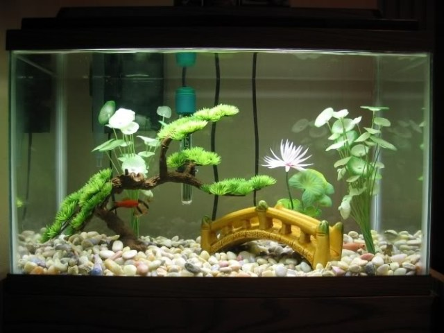 Decoration Aquarium Axolotl : Gallon fish tank decoration ideas