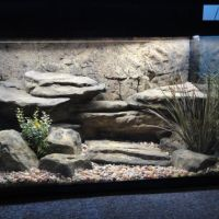 turtle tank background - Here's a turtle aquarium with a cool background.