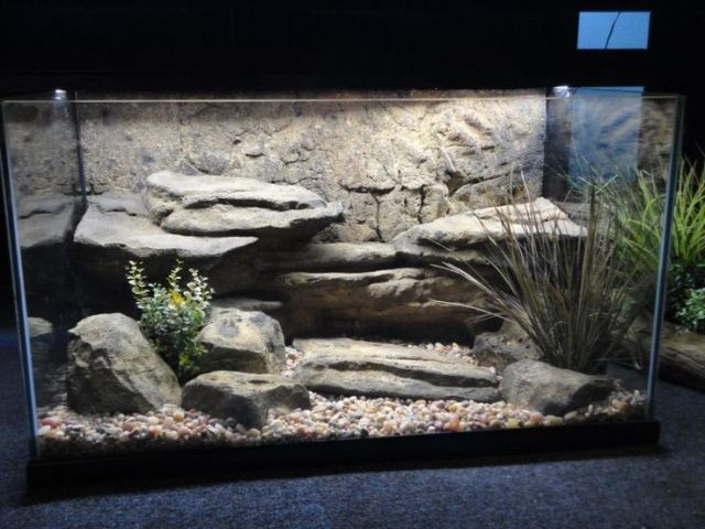 turtle tank background - Here?s a turtle aquarium with a cool ...