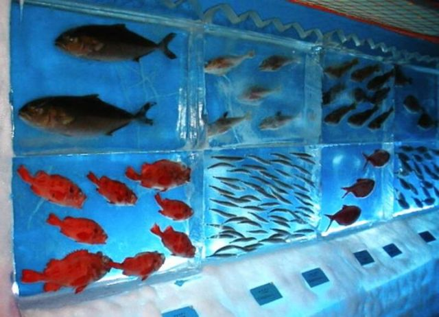 cool fish tanks | Octopus, crab and other fish are flash frozen and