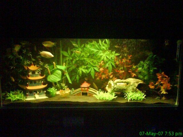 Decoration Zen Aquarium : Fish tank japanese decorations aquarium decoration hill