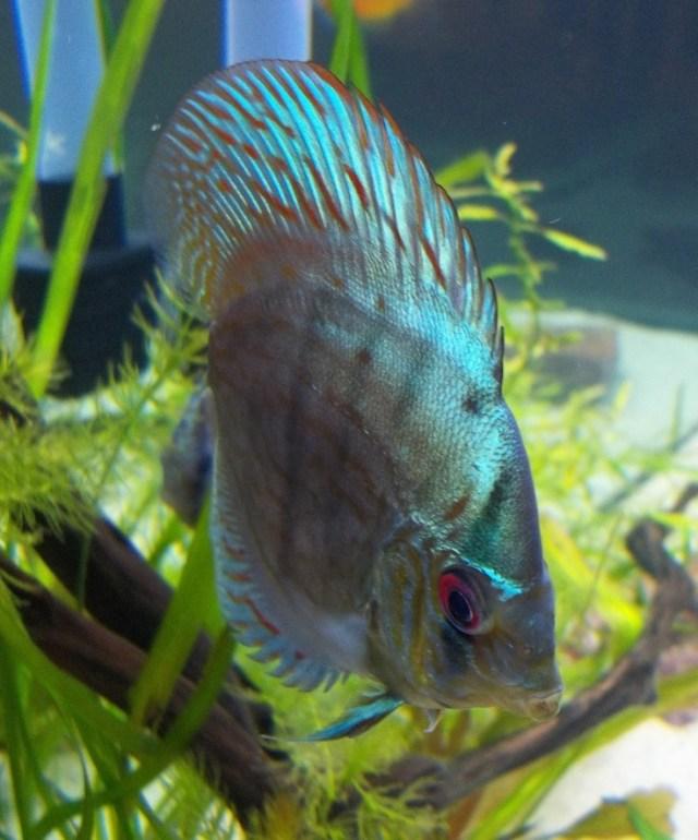 Fish tank vacuum petco all about fish for Petco fish bowl