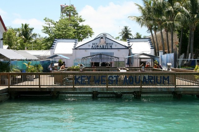 Key West Aquarium | toes in the water,  in the sand | Pinterest