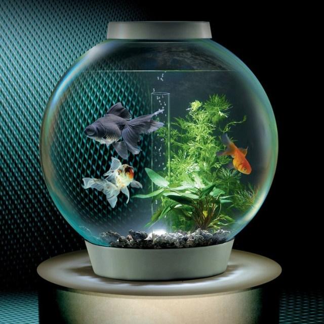 Low Maintenance Aquarium | Fish Tank | Pinterest