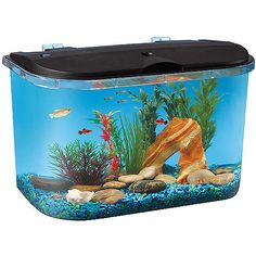 REALLY want a fish tank, this one is only 5 gallons and plus we can