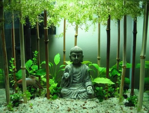 Fish tank Buddha   Home Design and Ideas; NSFW, 18    Pinterest