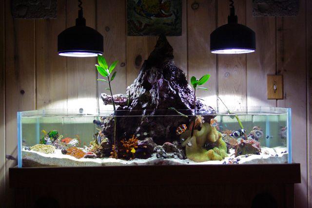 Volcano fish tank | Tanked | Pinterest