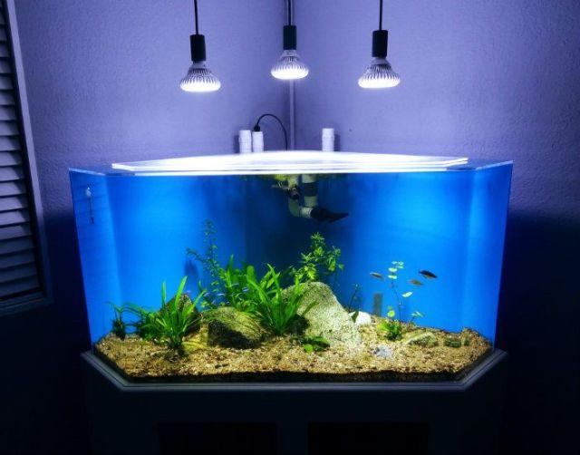 100 Gallon Planted Corner Tank   Video Build Journal
