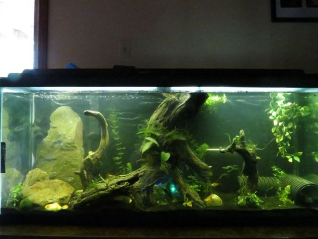 55 gallon aquarium fish tank #trustefish | Aquariums | Pinterest