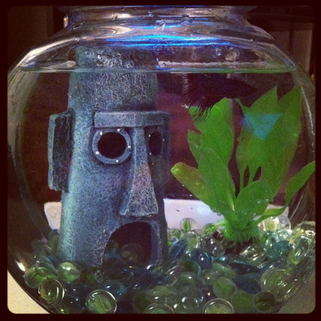Best fish tanks ever best fish tank ever fish tank for Fish tank full movie