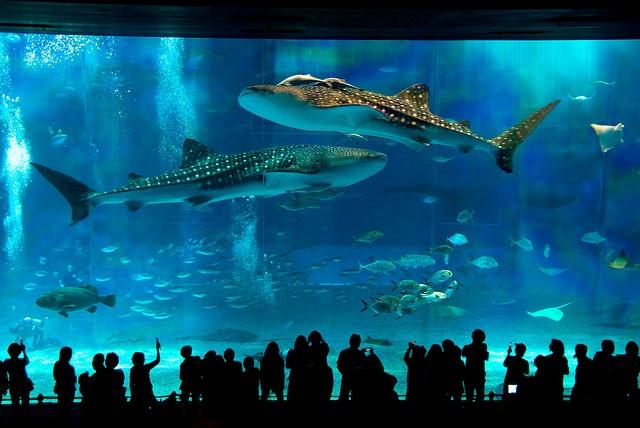 Okinawa Churaumi Aquarium, Japan | Beautiful Japan | Pinterest