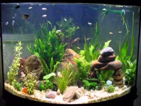 Diy fish tank decorations ideas   Decorating Ideas   Pinterest