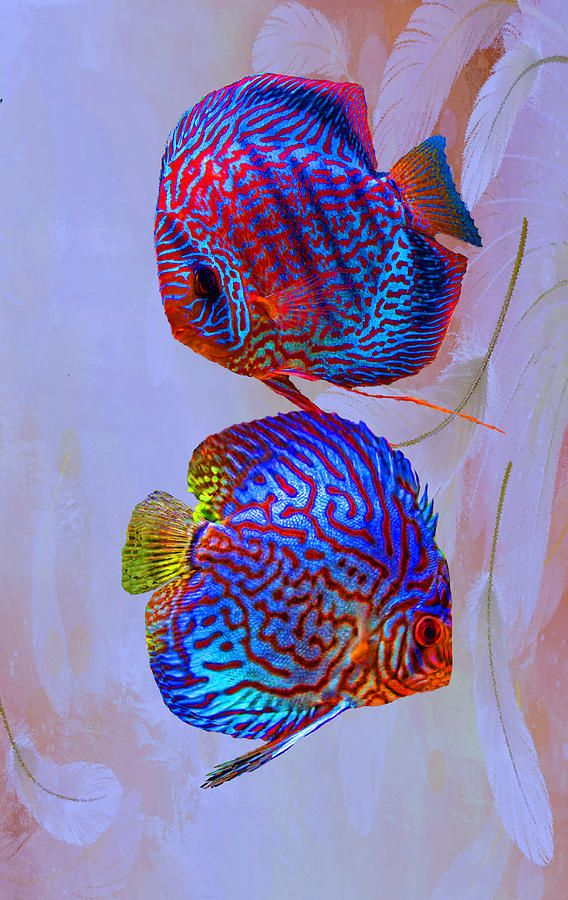 Freshwater Aquarium Fish Hard Water 2017 Fish Tank