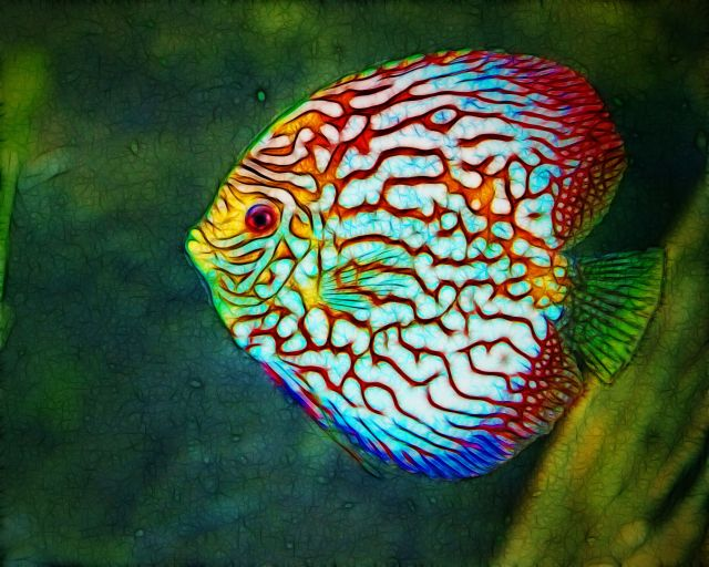 Discus Fish Aquarium Tips ? Online Chat Forums Comparison