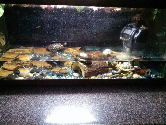 Idea for turtle tank setup   Tank Ideas   Pinterest