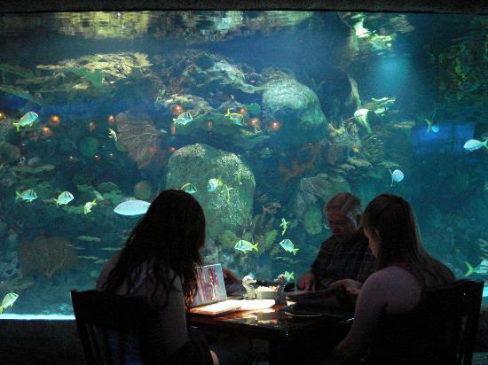 Aquarium Restaurant, Houston   Downtown   Menu, Prices & Restaurant