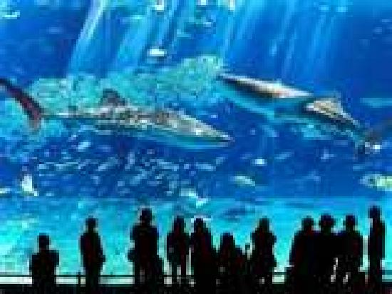 Picture of Cabrillo Marine Aquarium, Los Angeles   TripAdvisor