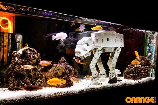 Star Wars fish tank   Picture of Orange Rooms, Southampton