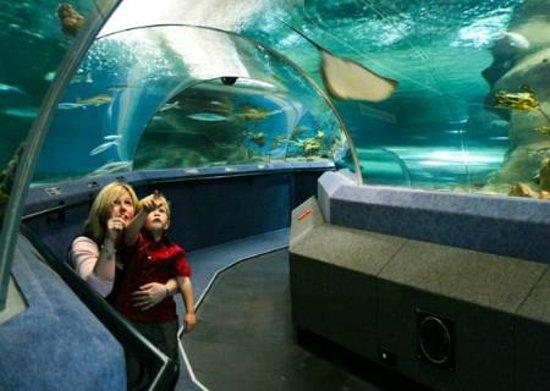National Aquarium Reviews   Napier, Hawke's Bay Region Attractions