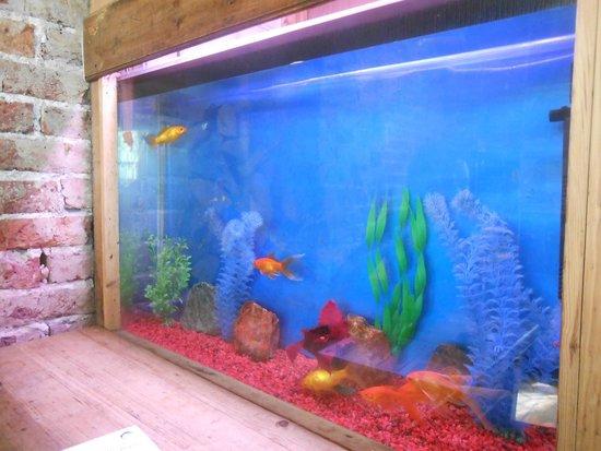 photo0   Picture of Fishbowl, Brighton   TripAdvisor