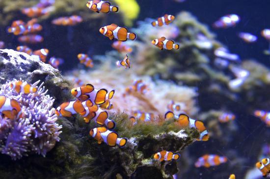 Fish Tank   Picture of Kelly Tarlton's Sea Life Aquarium, Auckland