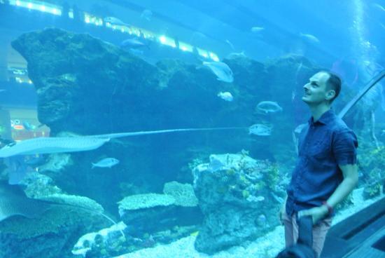 di Dubai Aquarium & Underwater Zoo : experiencing underwater near me