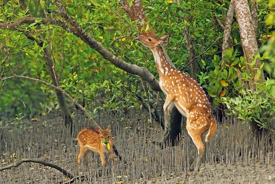 Image result for Sundarbans