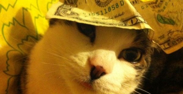 cashcats1
