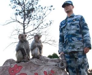 140508024945 china pla monkeys horizontal gallery