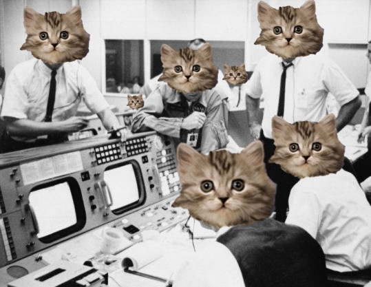 kittensinspace
