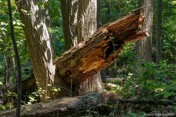 This fallen log was found behind NWF's headquarters building in Virginia. Photo by Avelino Maestas.