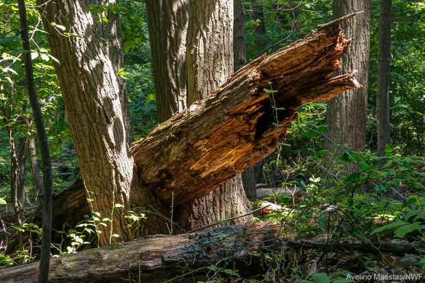 This fallen log was found behind NWF's headquarters building in Virginia. Photo by Avelino Maestas.