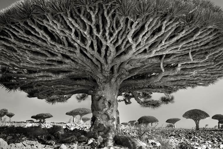 beth-moon-ancient-trees-8