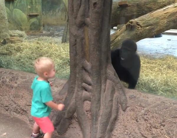 gorilla-boy