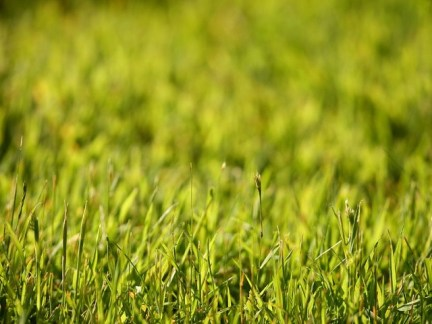 WENTWORTH, ENGLAND - MAY 22: A detailed view of the grass during the Second Round of the BMW PGA Championship at Wentworth on May 22, 2009 in Virginia Water, England. (Photo by Ian Walton/Getty Images)