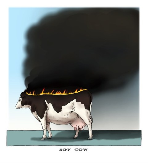 Joep Bertrams - The Netherlands - soy cow - English - soy, cattle fodder, illegal logging, fire