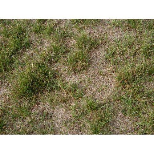 Medium Crop Of Redo Backyard Grass