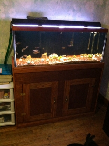 75 gallon fish tank & oak finished stand for sale