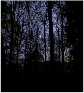 Och däruppe på himlen bidrar månen med sitt ljus.
