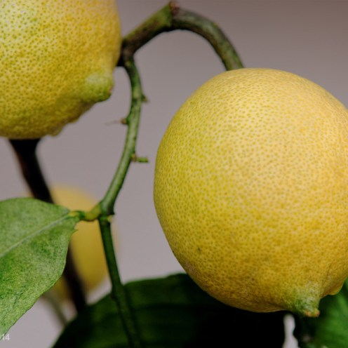 140207-citroner-008